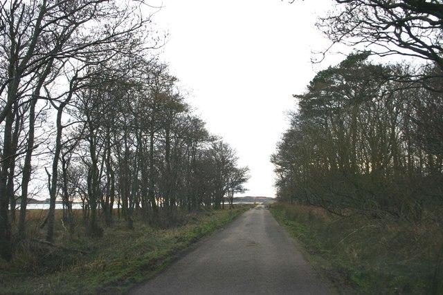 Tree lined road near Keills House.