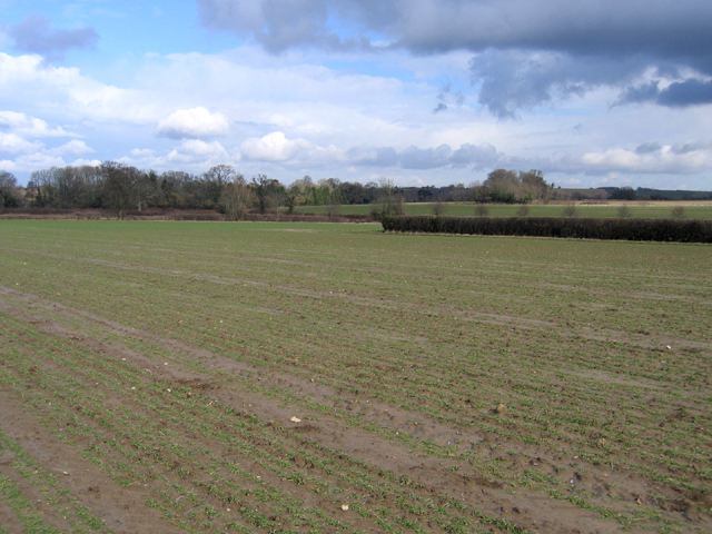 Farmland, Wigborough, South Petherton, Somerset