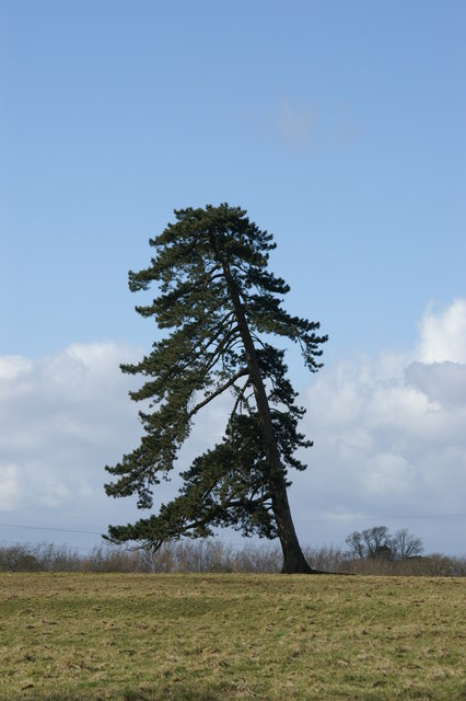 Lean to Tree