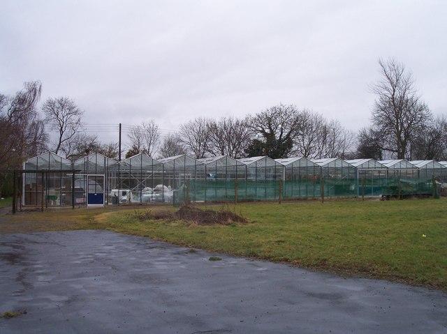 Glasshouses, Leckhampton Lane