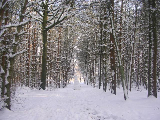 Winter snowscene at Den Wood, Countesswells