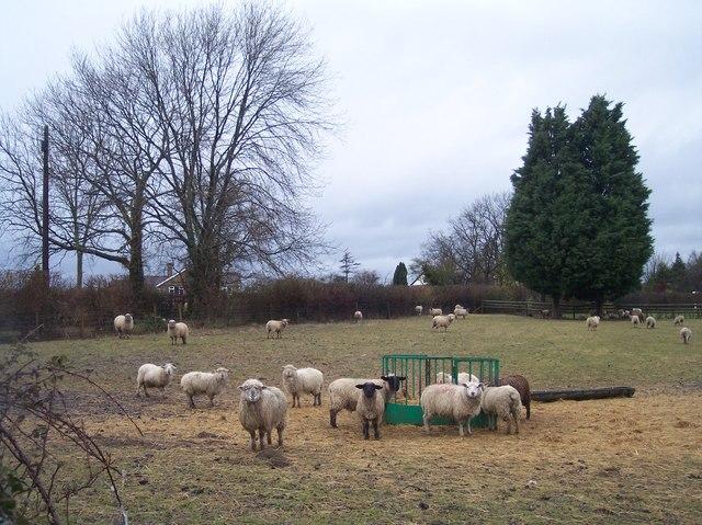 Smallholding, Crippetts Lane near Leckhampton