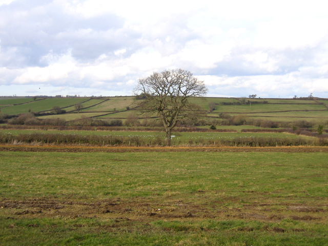 Broad River valley, Haselbury Plucknett, Somerset