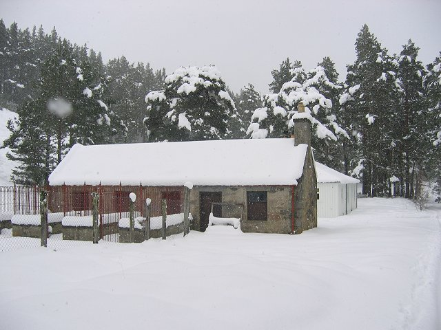 Kennels near Forest Lodge