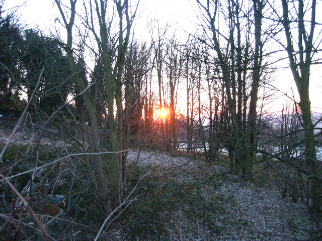Dawn through the trees, Fulneck, Pudsey