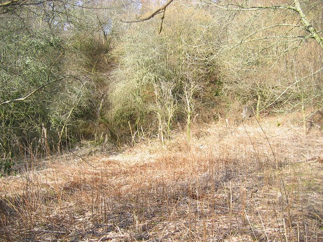 Hill Wood.