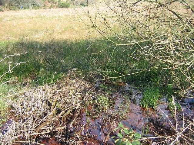 Wetland near Dalbeattie.
