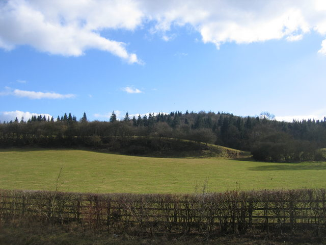 Oversley Wood