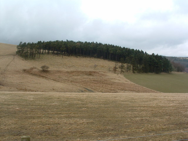 Sandy Hill Wood