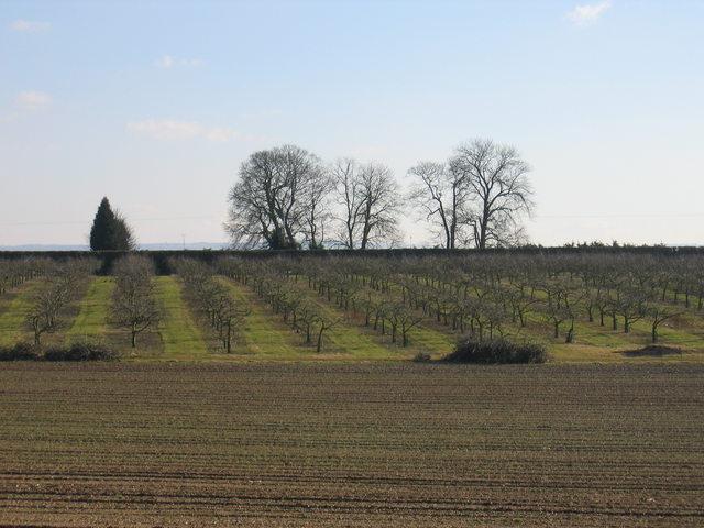 Orchards at Dunnington Heath