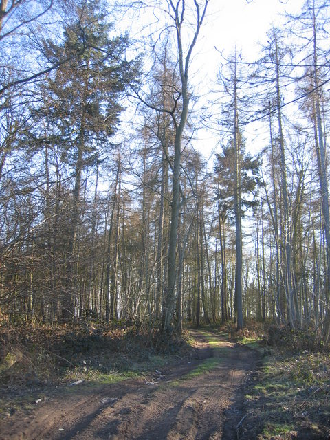 Ennister Wood