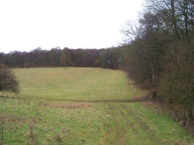 Chatcombe Wood