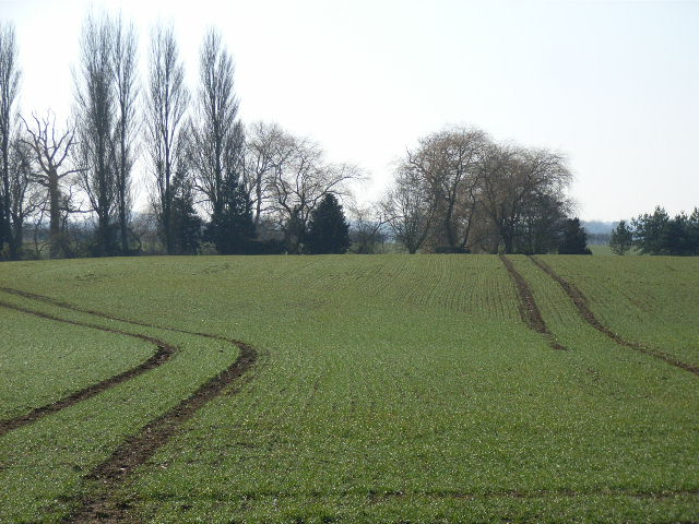Farmland near Little Haseley