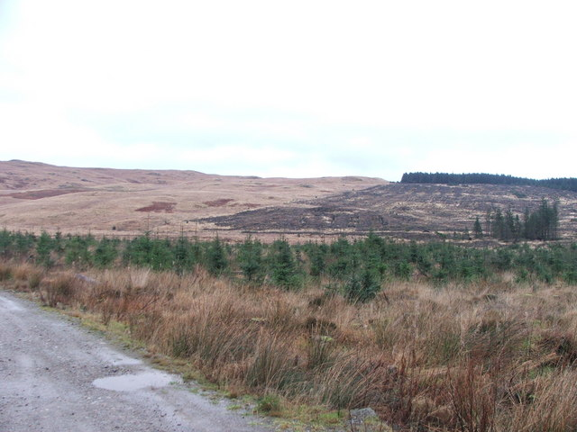 Harvested forestry on Kintyre.