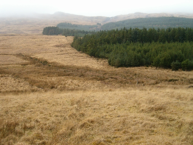Moor, mist and forest