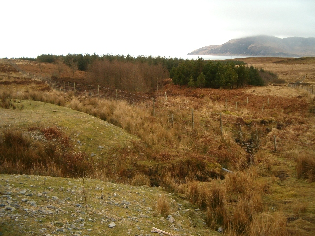 Small wood on Jura