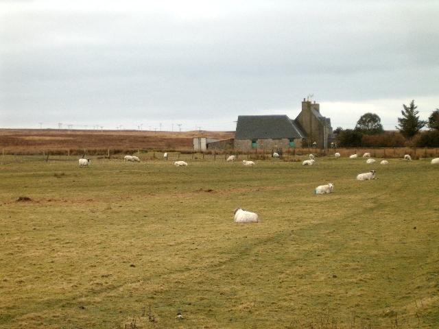 Sheep farming at Torra