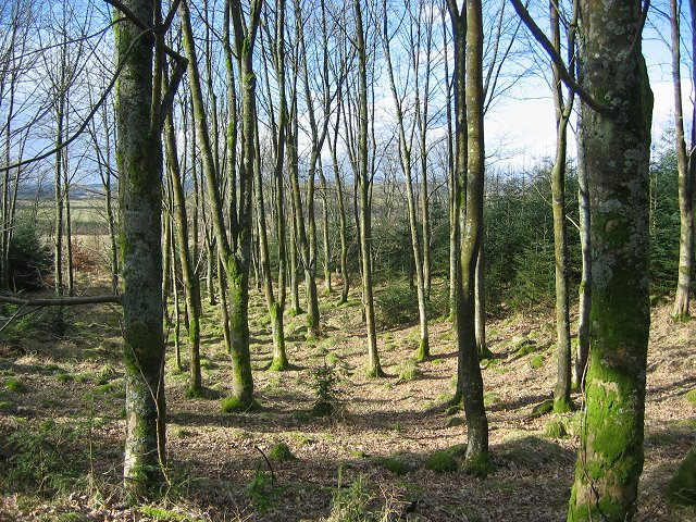 Woodland, Clawbelly Hill.