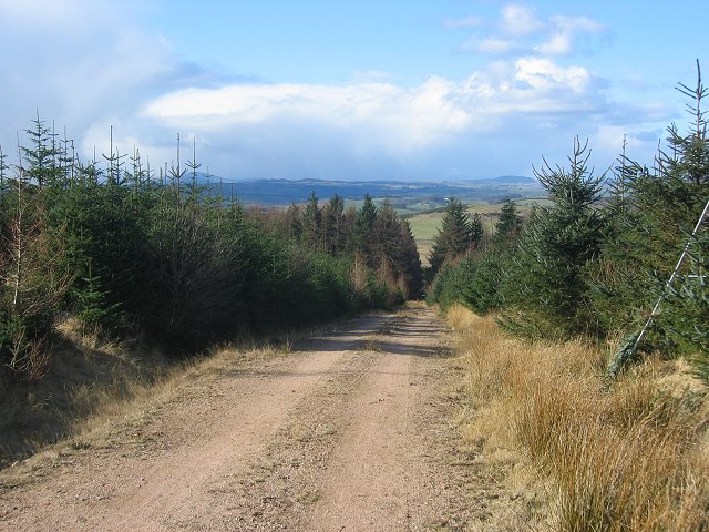 Forest road on Clawbelly Hill.
