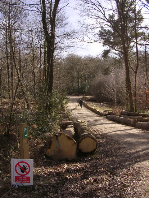 Track through the King's Copse Inclosure, New Forest