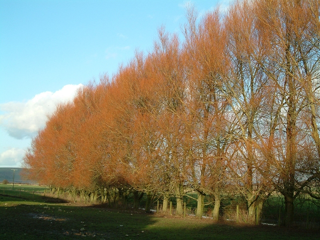Willows at Southease