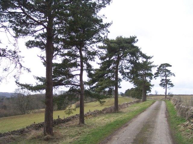 Lane to Ebworth House