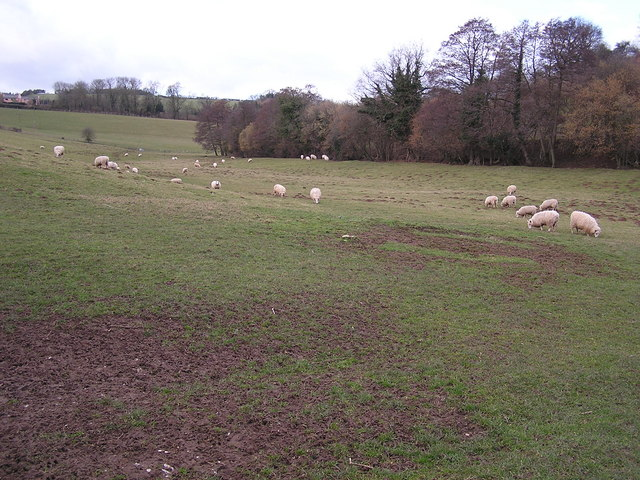 Farmland near Whitchurch