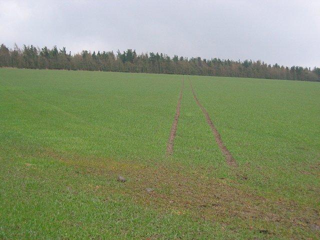 Field, Castleton