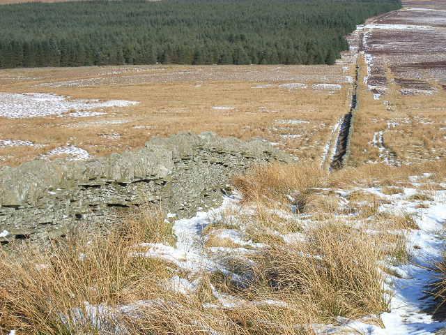 Long Moss