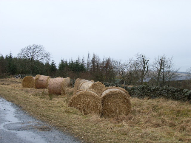 Roadside hay at The Nook