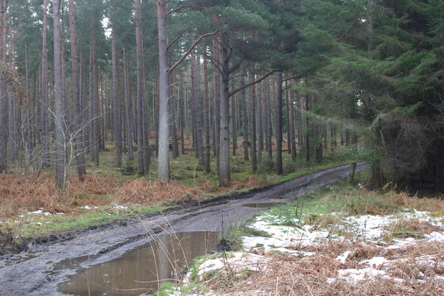 Track into Findrassie Wood