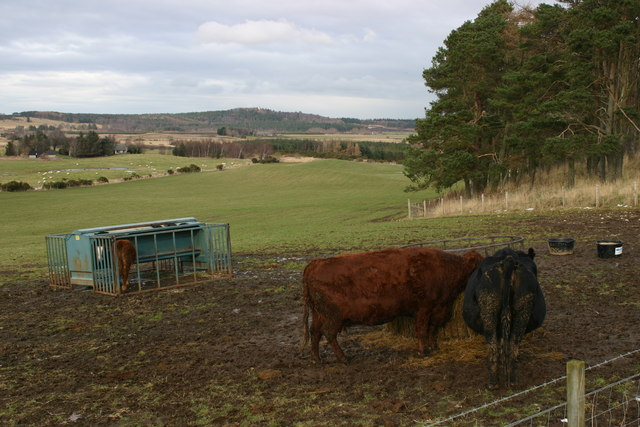Farmland near Hillside