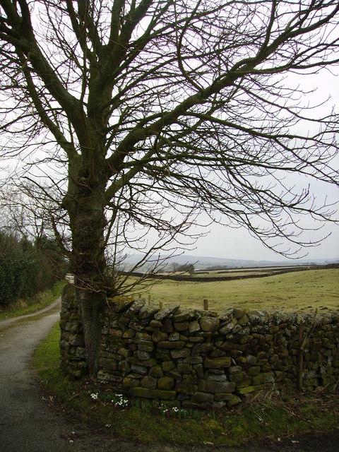 Track to Thwaite Moss