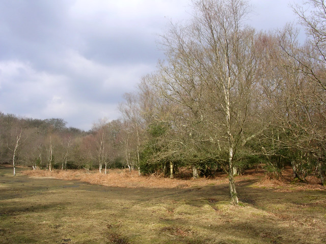 Open forest near Lower Canterton, New Forest