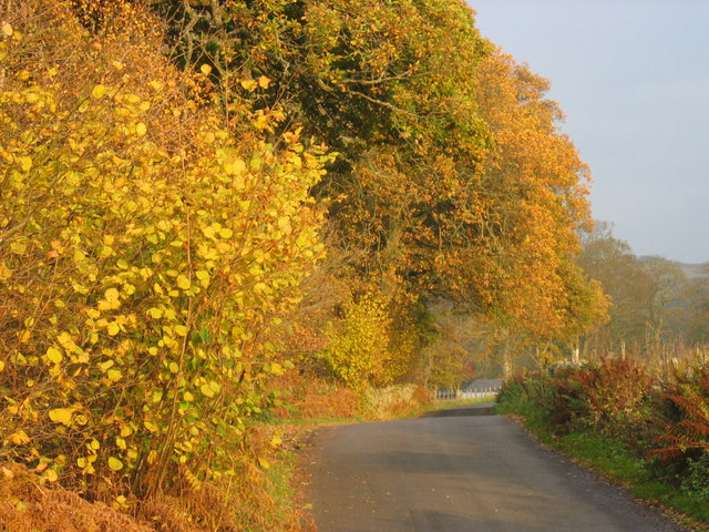 Wood and Country Lane in Autumn