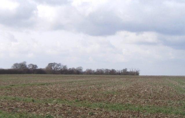 Empty farmland near Canewdon