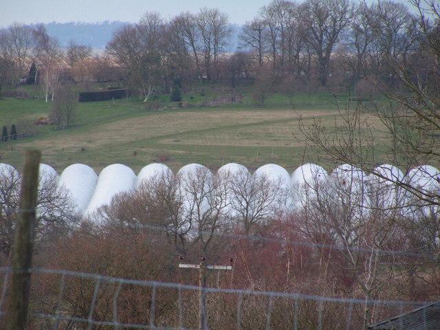 Polythene Tunnels