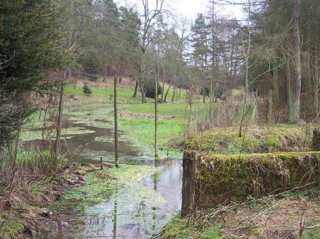 Hilcot Brook near Upper Hilcot Farm