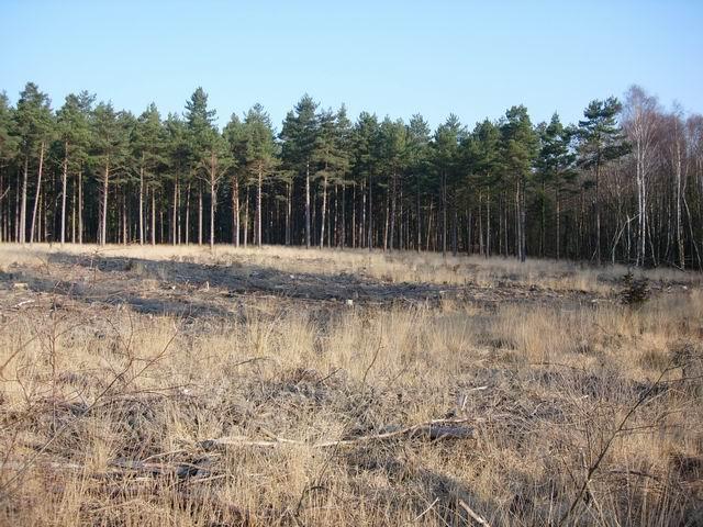 Recent clearfell area in Deerleap Inclosure