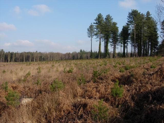 Cleared area in Deerleap Inclosure