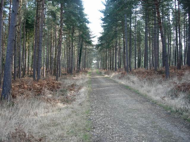 Cycle track through Deerleap Inclosure