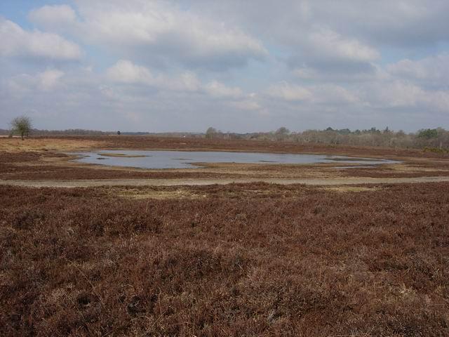 Heathland Pool