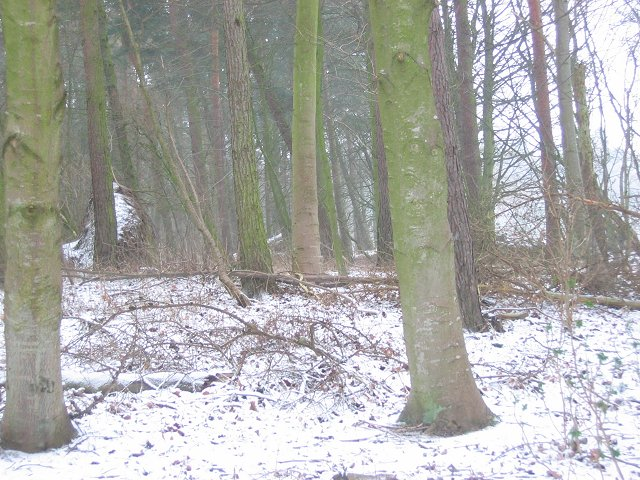 Baro Wood