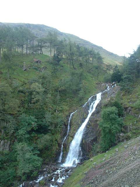 Taylor Gill Force