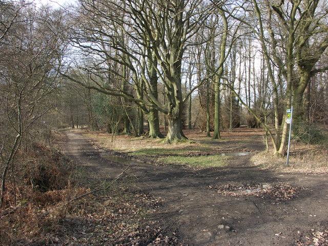 Footpath Junction in Chisley Wood
