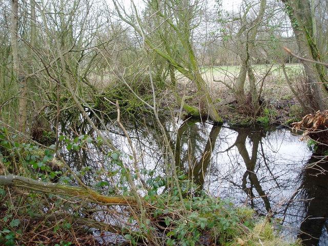 Pond near Llanynys