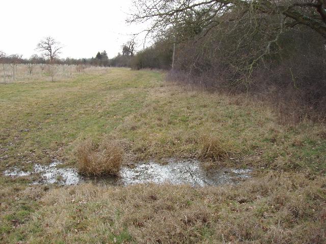 Wet pasture on clay, Saffron Green