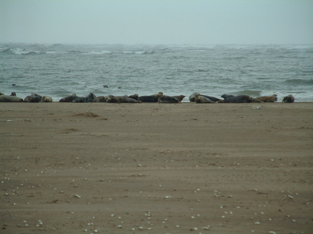 Seals on a sand bank