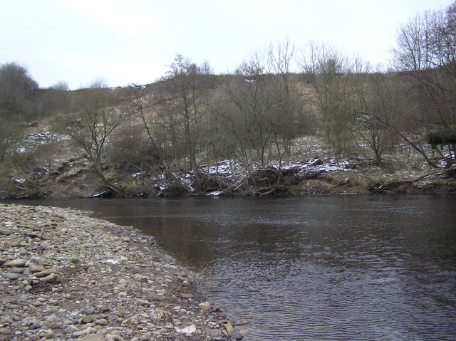 Manfield Scar : River Tees. Low Coniscliffe