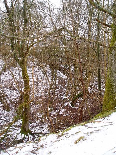 Woods near Clocaenog.